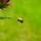 Zelf lieveheersbeestjes kweken? Ja dat kan!